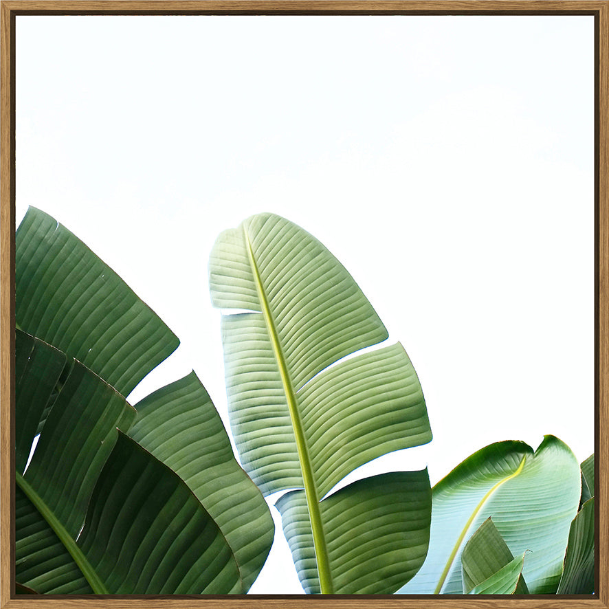 Banana Leaf Sails 100x100