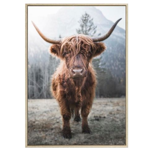 Henry Highland Cow 100x140 - PICK UP ONLY