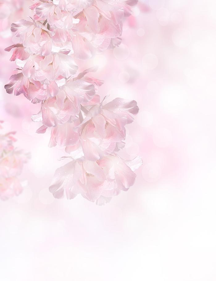 Painted Pink Spring Flowers Over The Bokeh Background Photography J-0557