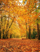 Autumn Forest Covered With Fallen Leaves Rode Backdrop - Shop Backdrop
