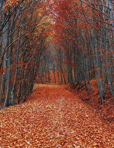 Covered With Fallen Leaves Road Autumn Scenery Photography Backdrop N-0107