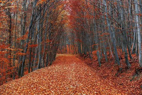 Autumn Forest Road With Fallen Leaves Photography Backdrop N-0091