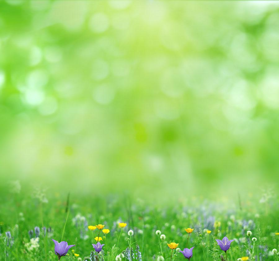 Bokeh Green Background With Wildflower Photography Backdrop J-0474 - Shop Backdrop