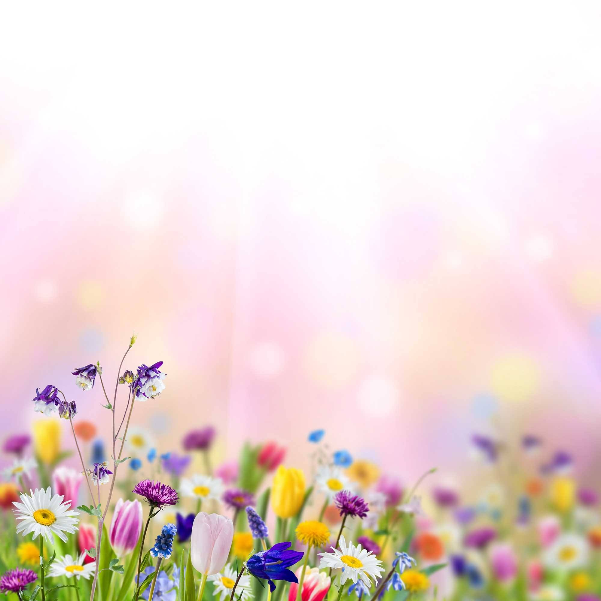bokeh sunshine wildflowers with pink background for baby backdrop