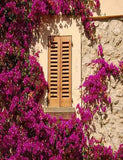 Brown Wood Window Purple Flower Around Photography Backdrop