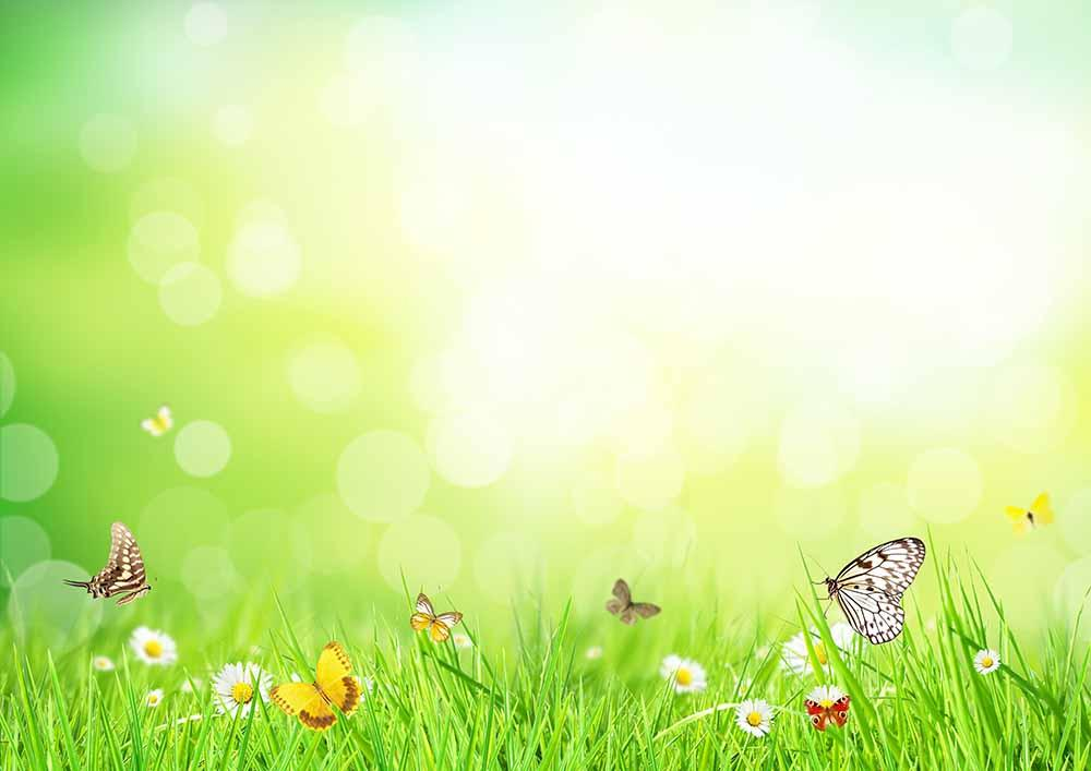 Butterfly White Flower And Grass In Sunshine Bokeh Backdrop For Photo - Shop Backdrop