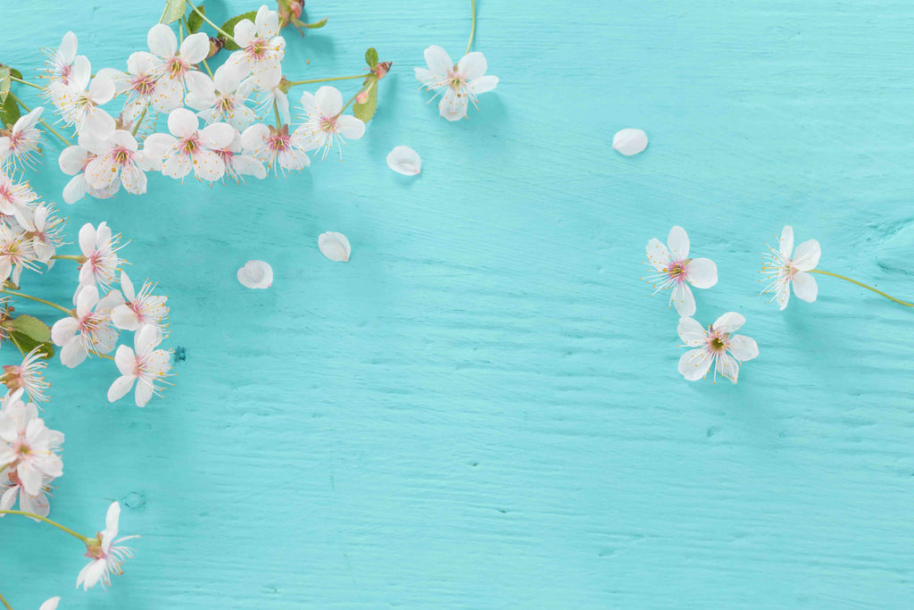 Cherry Blossom Petals On Cold Blue Wood Around Backdrop - Shop Backdrop