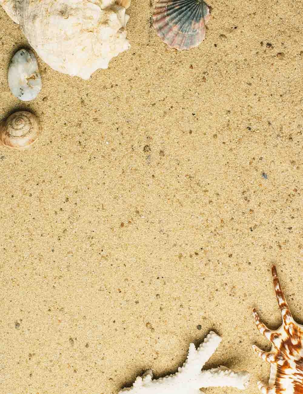 Conch Seashell On Beach For Baby Holiday Photography Backdrop - Shop Backdrop