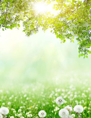 Dandelion Bokeh Sunshine For Spring Photography Backdrop  J-0552