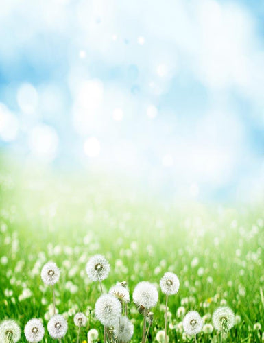 Dandelion With Bokeh Sky For Spring Photography Backdrop  J-0158