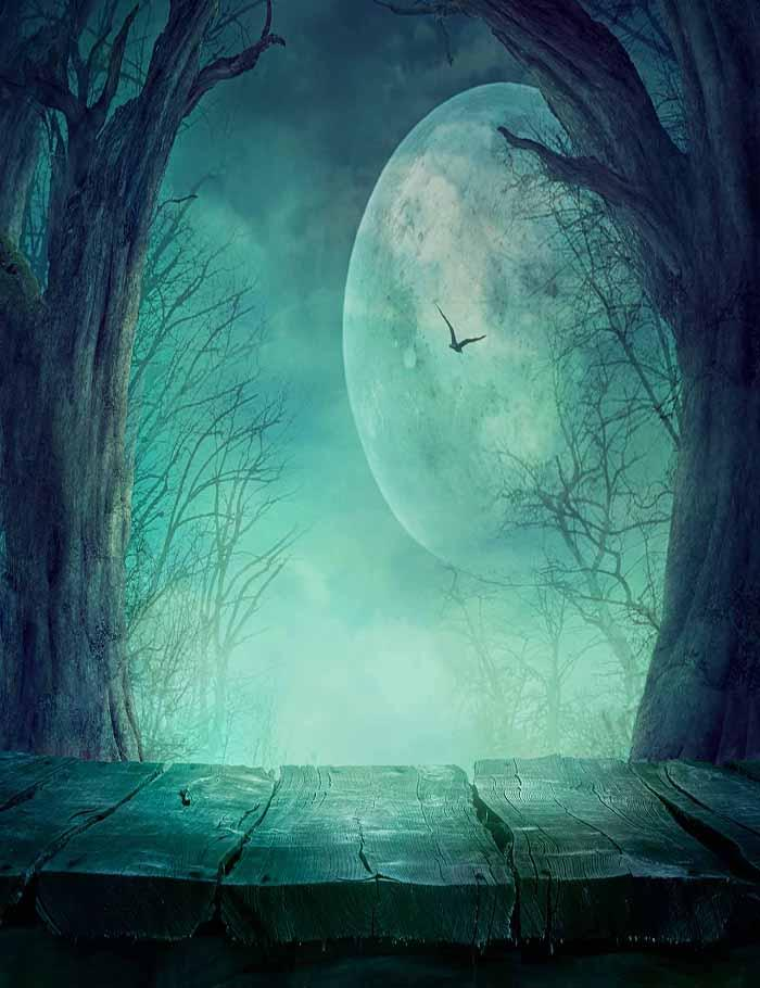 Eerie Night With Bat Dry Tree Background For Halloween Backdrops