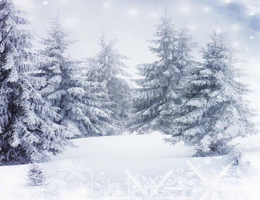 Fir Tree Covered Snow For Winter Holiday Photography Backdrop J-0250