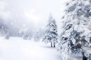 Forest Covered With Snow For Winter Holiday Photography N-0006