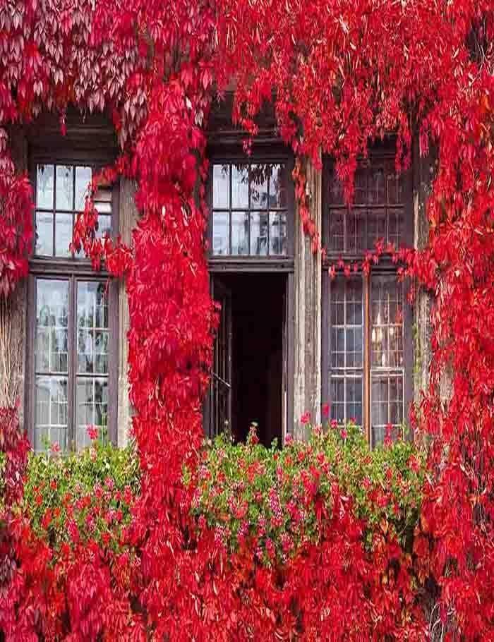 Glass Window And Door Surrounded With Red Plant Photography Backdrop