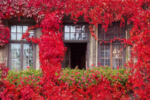 Glass Window And Door Surrounded With Red Plant Photography Backdrop - Shop Backdrop