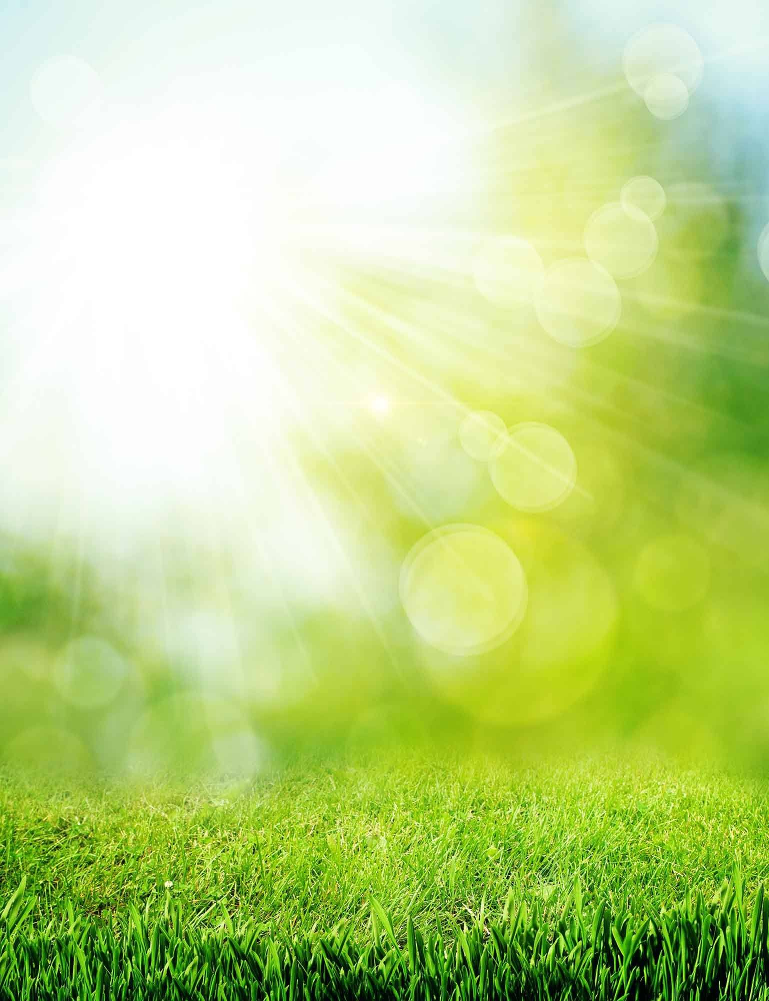 Green Grass In Bokeh Sunshine For Baby Photography