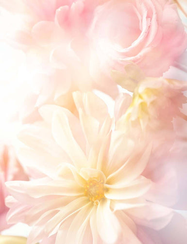 Light Pink Flower Backdrop For Baby Photography