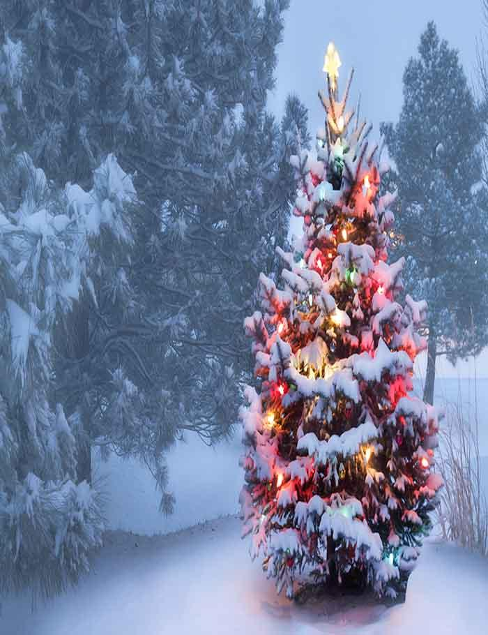 Outdoor Snow Covered Christmas Tree Glows Brightly Photography Backdrop J-0156