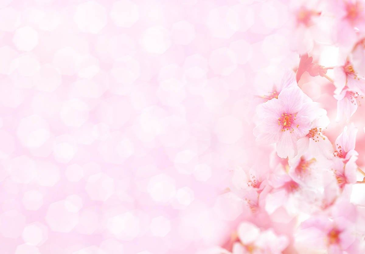 Pink Flower With Pink Bokeh Background For Spring