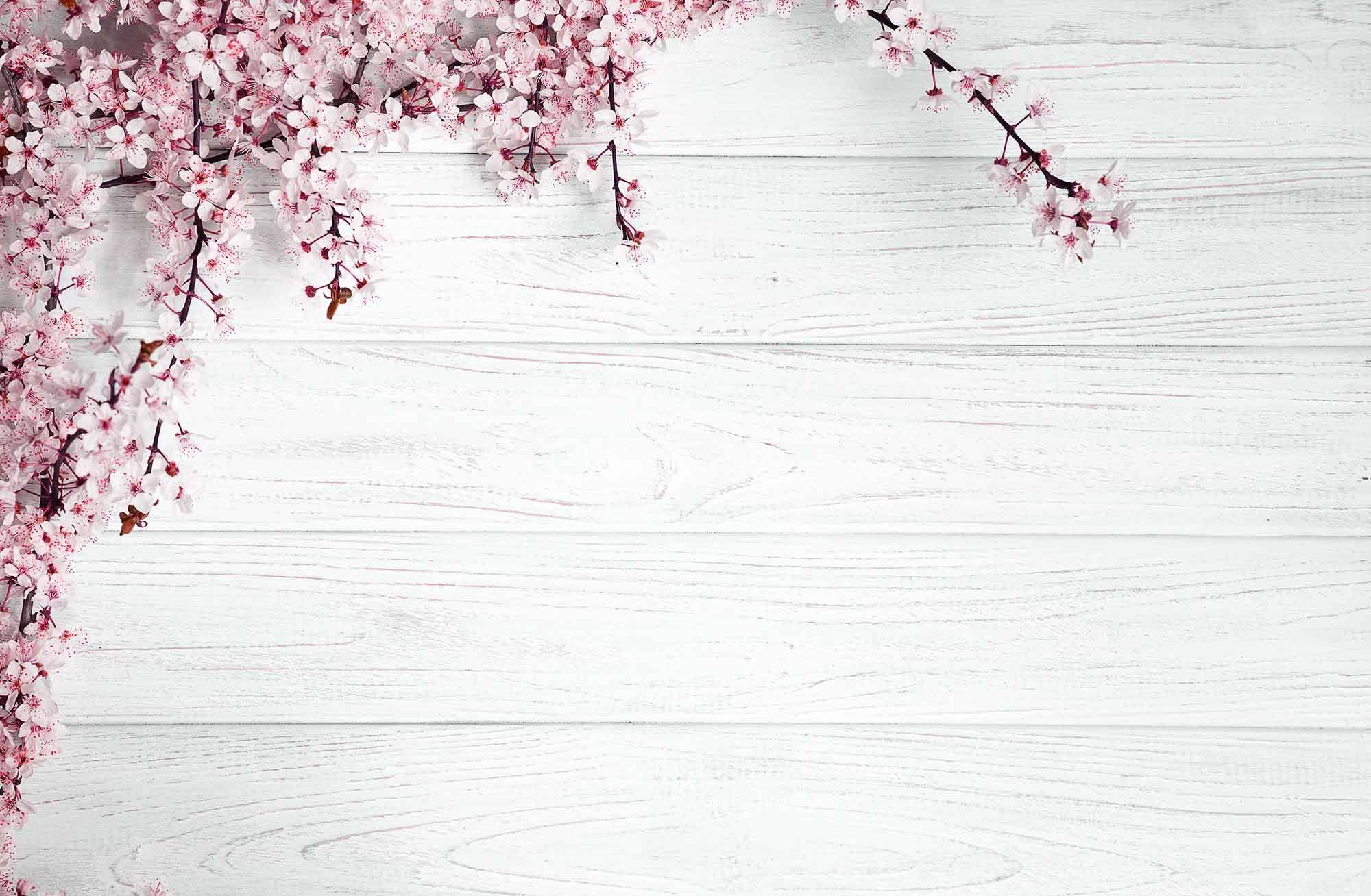 Pink Flowers On Light Cyan Wood Floor Photography For