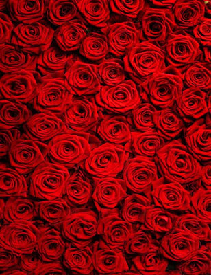 Red Rose Wall For Wedding Photography Backdrop J-0257
