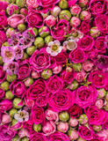 Rose Bud And Rose Flower Make Wall For Wedding Photo Backdrop