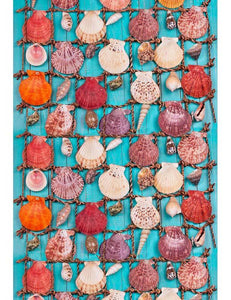 Sea Shells Over Blue Background Wood Summer Holiday Photography Backdrop F-2661