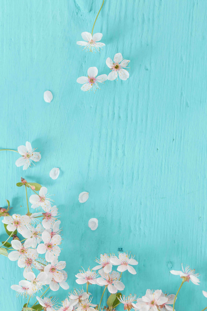 Beautiful Pink Cherry Flowers On Turquoise Blue Wood Board Backdrop - Shop Backdrop