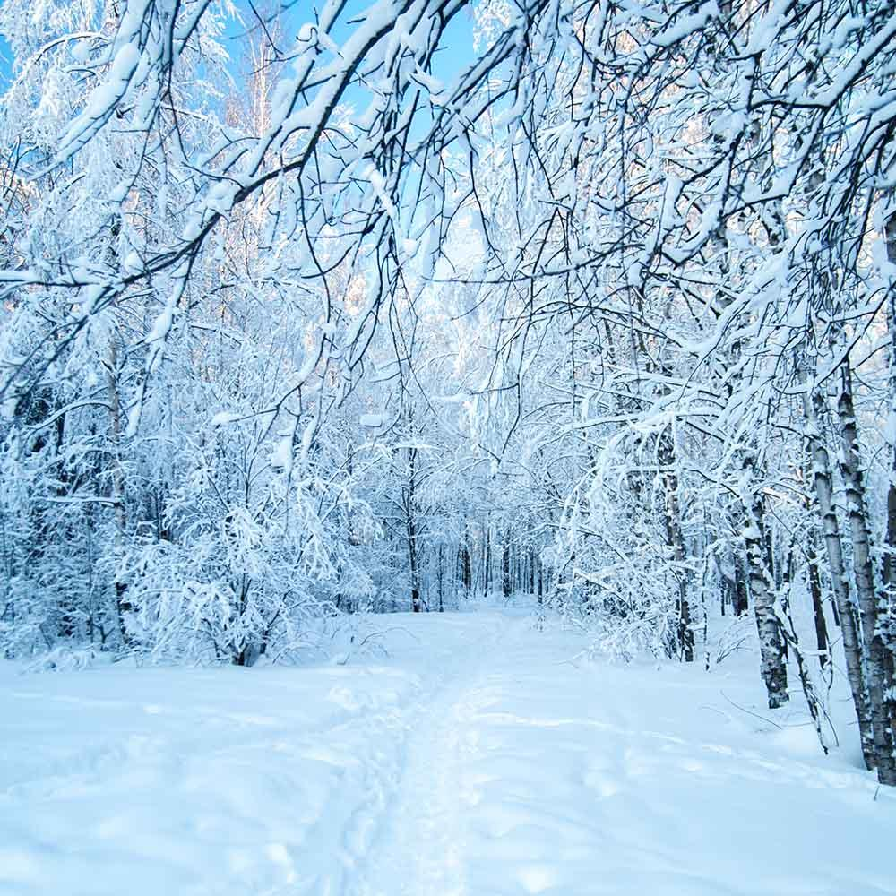 Snow-covered Forest Winter Landscape Photography Backdrop ...