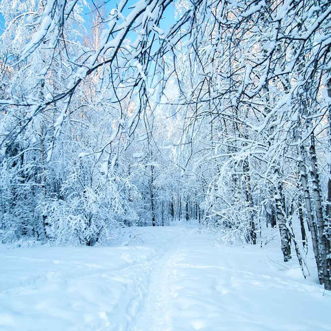 Snow-covered Forest Winter Landscape Photography Backdrop N-0058
