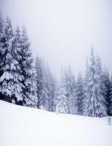 Snow Covered Pine Forest Winter Holiday Backdrop Photography J-0121