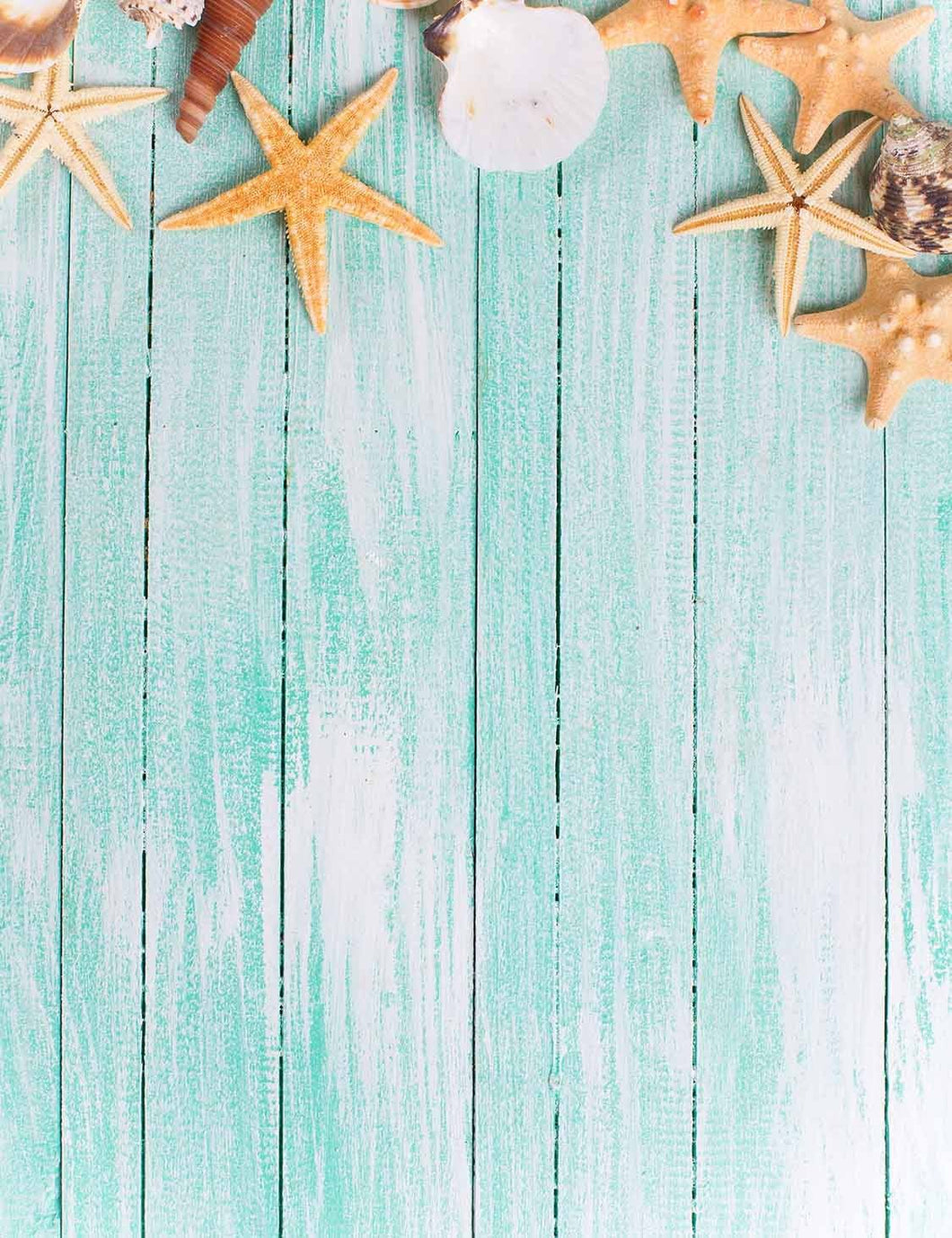 Starfish Conch On Baby Blue Wood Floor Backdrop For Photography