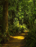 Summer Forest Trail With Shrub Backdrop For Photography