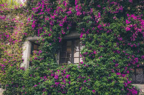 Window In Flower For Summer Wedding Photography Backdro