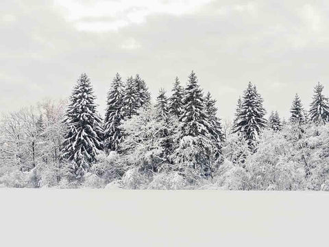 Winter Snow Covered Forest Photography Backdrop J-0248