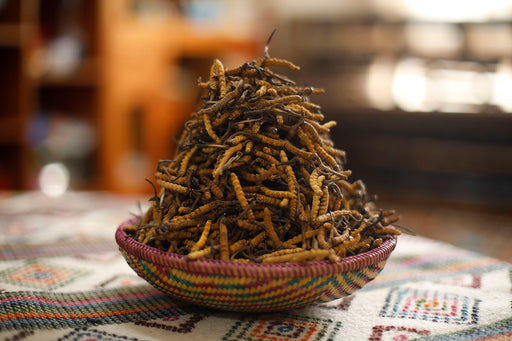 High Quality cordyceps from Bhutan - Druksell.com (4437294874742)