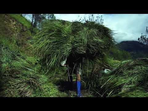 Lemongrass extraction in Bhutan