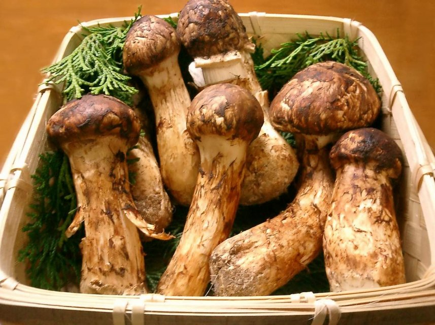 Image result for MATSUTAKE MUSHROOMS