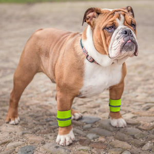 Dog Safety Reflective Wrist Bands - Perfenq