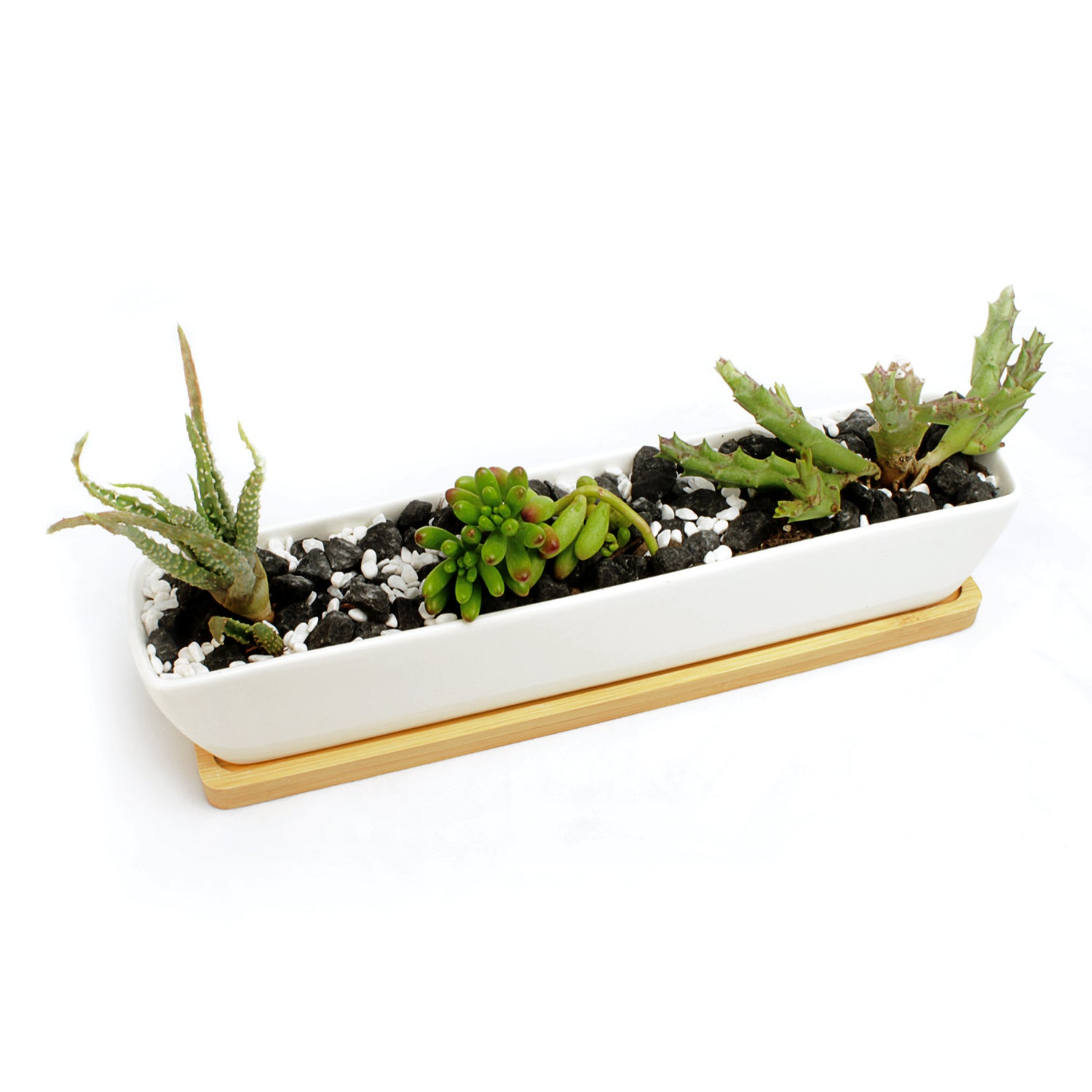 "11"" Long, Rectangle, Mini Succulent Planter with Succulent Plants"