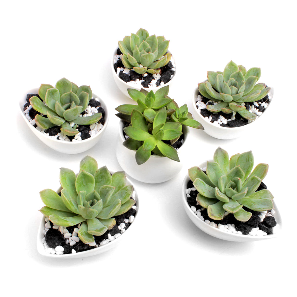 Set of 6 Flower-Shaped Succulent Planters