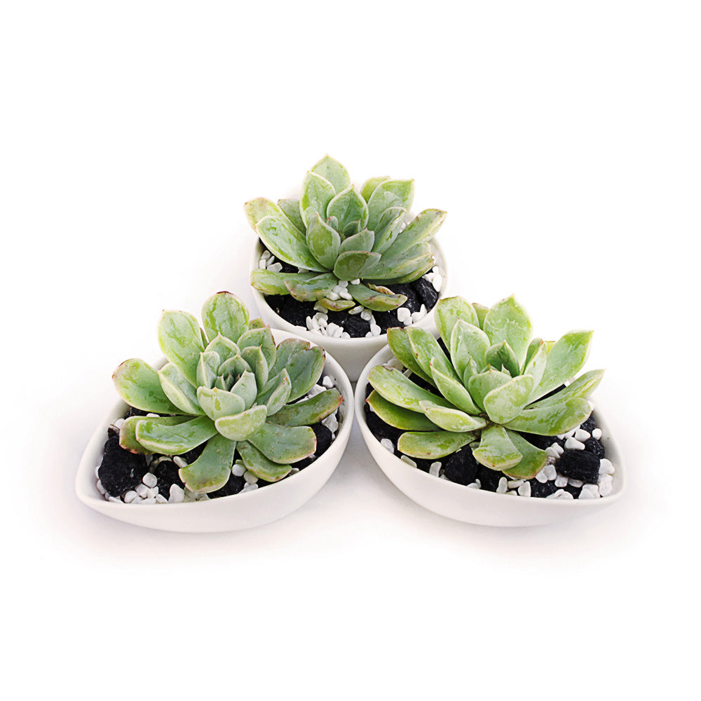 Set of 3 Teardrop Shape Succulent Planters