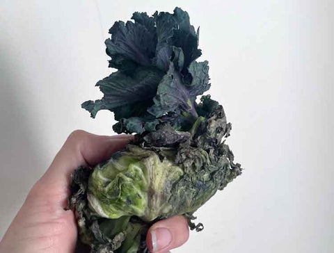 upcycled vegetable scraps cabbage