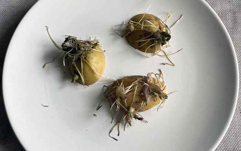upcycled vegetable scraps potatoes