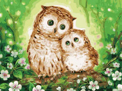 Owl Paint By Numbers Collection