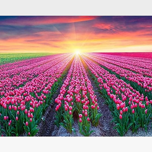 Colorful Tulips Sunrise DIY Painting By Numbers Kit - Painting By Numbers Kit - Artwerkes