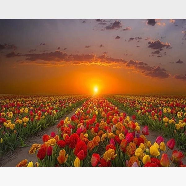 Colorful Tulips Sunset Painting By Numbers Kit - Painting By Numbers Kit - Artwerkes