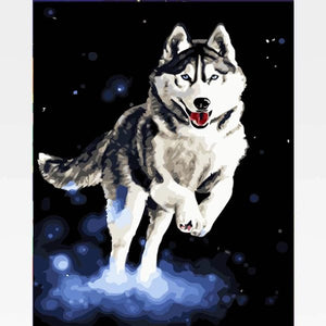 DIY Siberian Husky Paint By Numbers Kit Online  - Houdini - Painting By Numbers Kit - Artwerkes