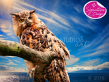 Owl over the Sea  | SIGNATURE |  Diamond Painting - Treasure Studios Art