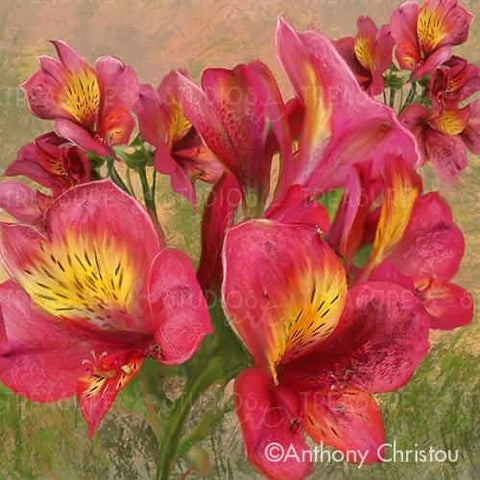 Pink Orchid Bloom by Anthony Christou | Diamond Painting